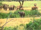 Elefanten Herde im Amboseli
