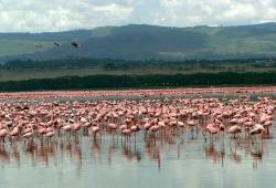 Nakuru See