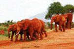 bce elephant2_150